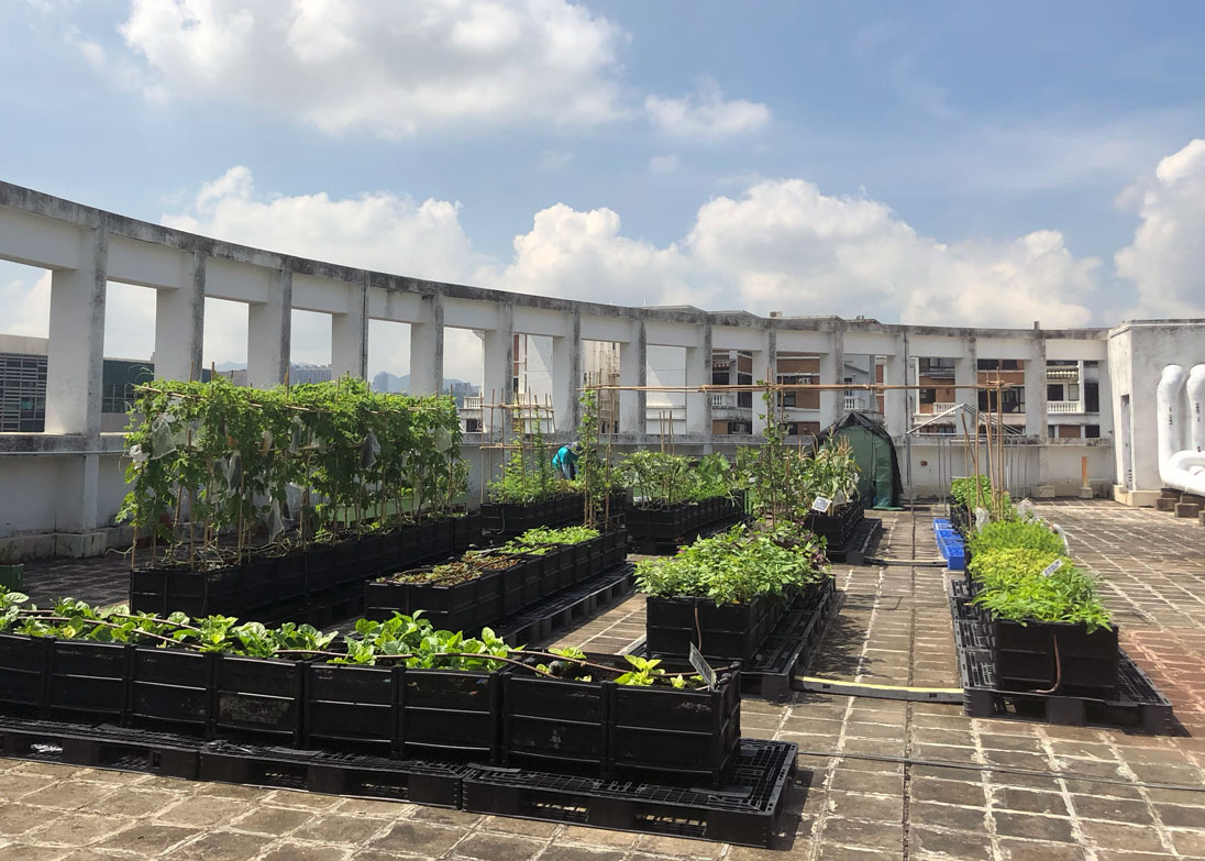A Rooftop Republic farm on the roof of the Business Environment Council in Kowloon Tong