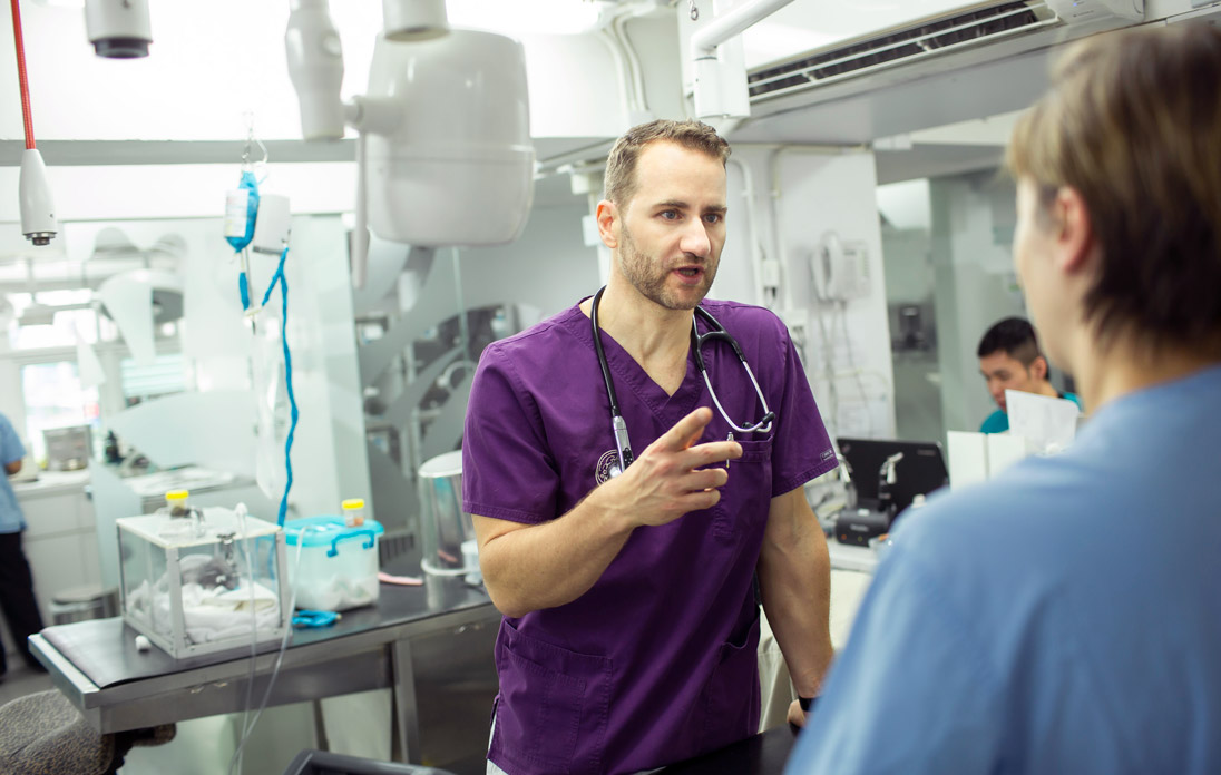Dr Zoltan Szabo, a veterinarian specialising in exotic animals, consults with a colleague at Tai Wai Small Animal and Exotic Hospital